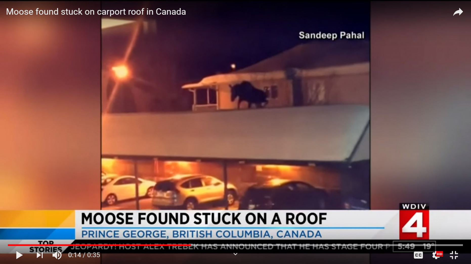 Man Discovers Moose on His Roof | Realtree Camo