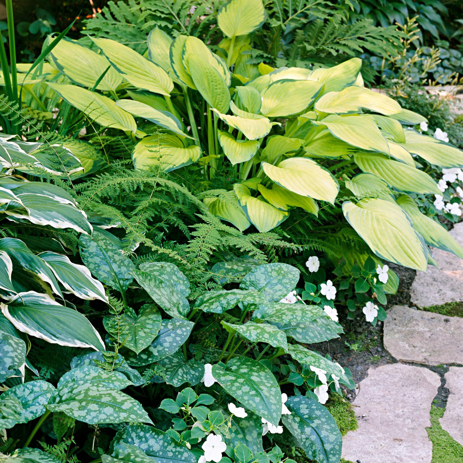 Tough Perennials That Grow In Dry Shade | Better Homes & Gardens Landscaping Ideas Around A Carport